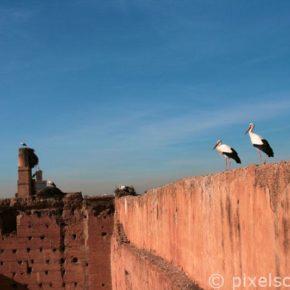 stoerche-marrakesch