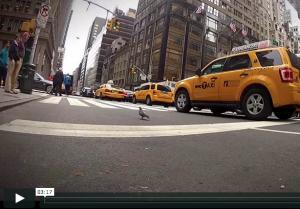 New York Film Video