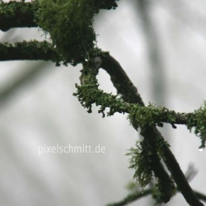 tagesausflug-nach-sintra-im-nebel-01