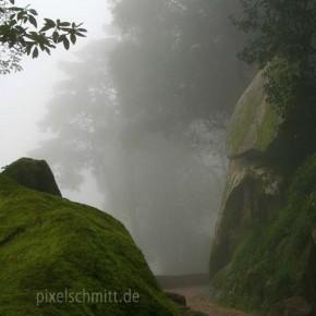 tagesausflug-nach-sintra-im-nebel-03