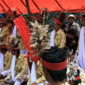 blutige-zeremonie-in-sulawesi-16