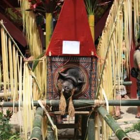 blutige-zeremonie-in-sulawesi-4