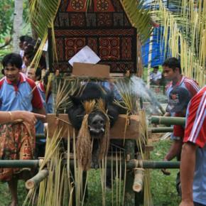 blutige-zeremonie-in-sulawesi-5