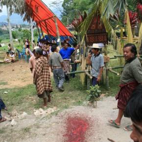 blutige-zeremonie-in-sulawesi-x-5