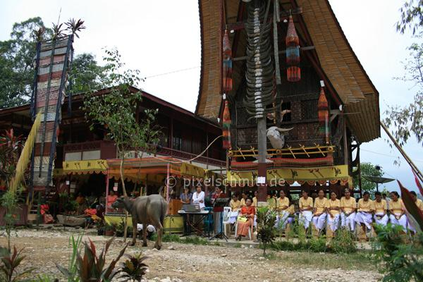blutige-zeremonie-in-sulawesi