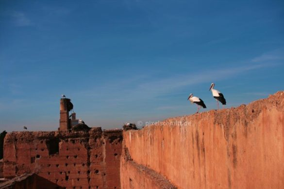 stoerche-in-marrakesch-03