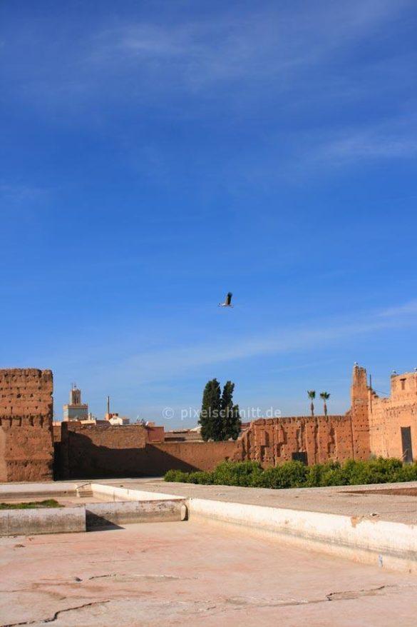 stoerche-in-marrakesch-05