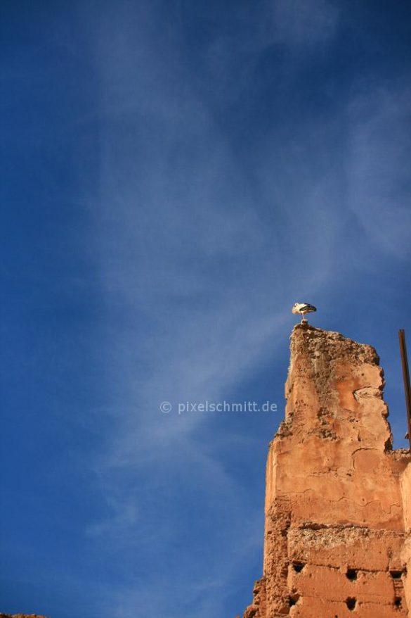 stoerche-in-marrakesch-07