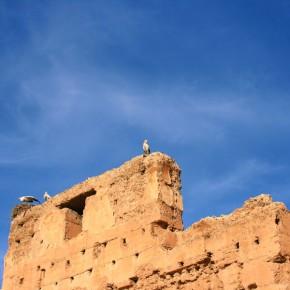 stoerche-in-marrakesch-08
