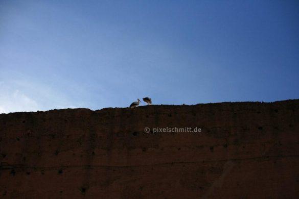 stoerche-in-marrakesch-12