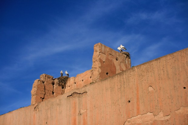 stoerche-in-marrakesch-14