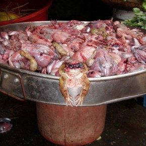 reisebericht-kambodscha-blogp3280046