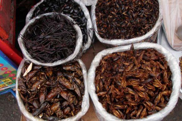 reisebericht-kambodscha-blogp3280047