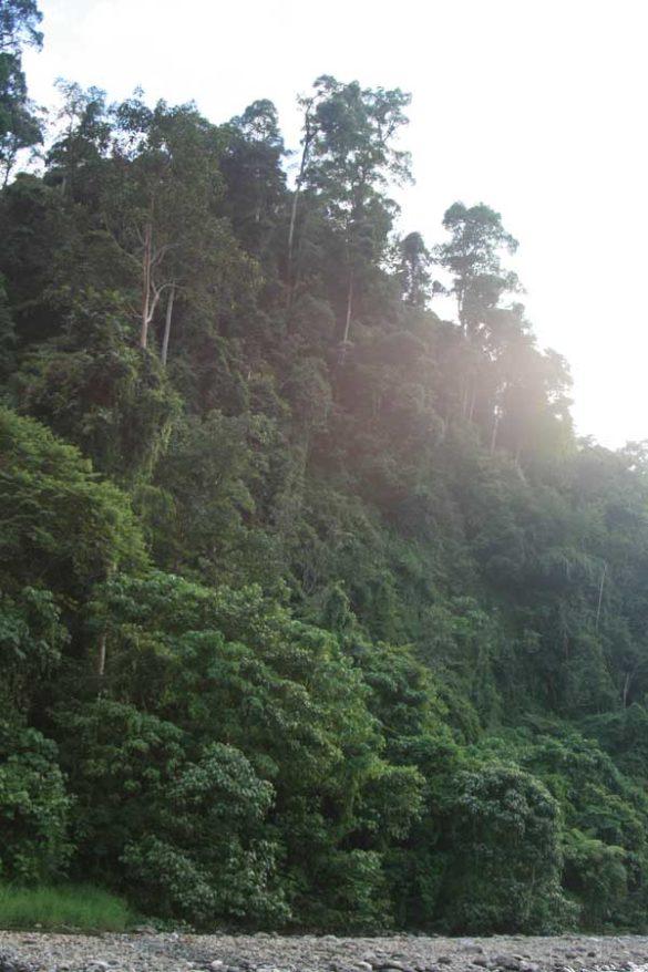 orang-utan-sumatra-bukit-lawang-02
