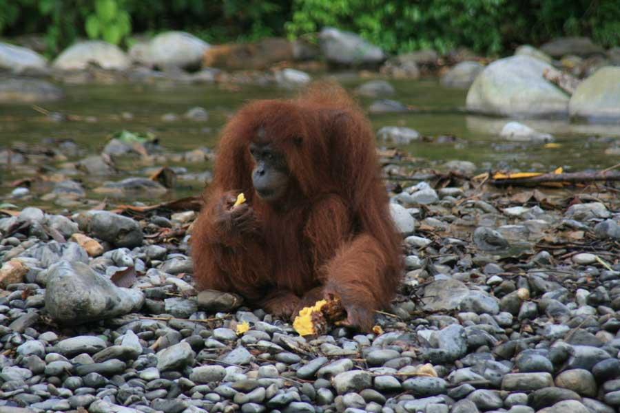 In 22 Fragen durch Asien – Liebster Award mit Schwerpunkt Indonesien