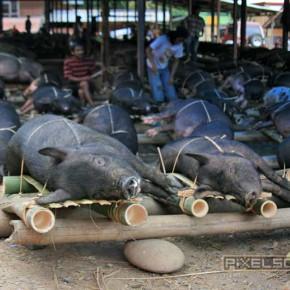 bueffel-markt-rantepao-sulawesi-fotos-009