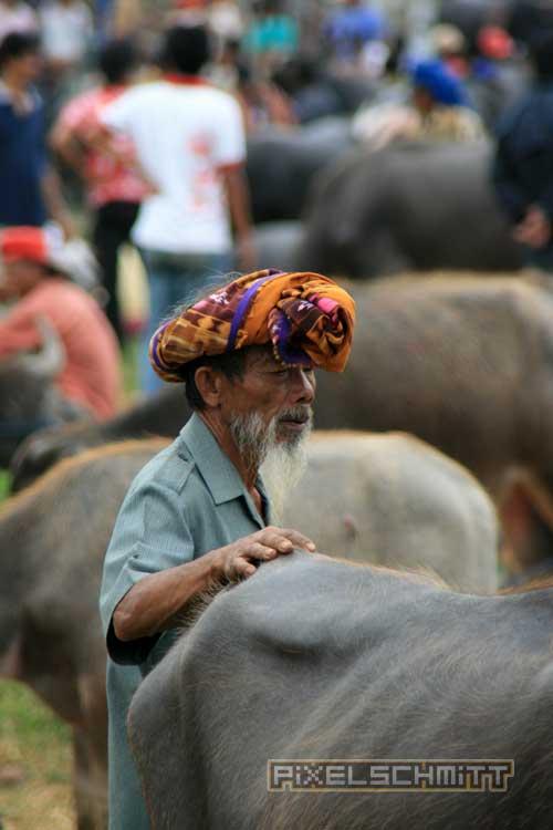 bueffel-markt-rantepao-sulawesi-fotos-012