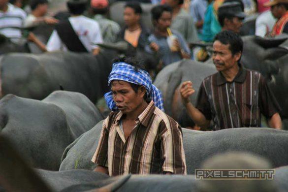 bueffel-markt-rantepao-sulawesi-fotos-019