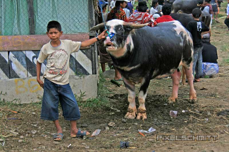 bueffel-markt-rantepao-sulawesi-fotos-022