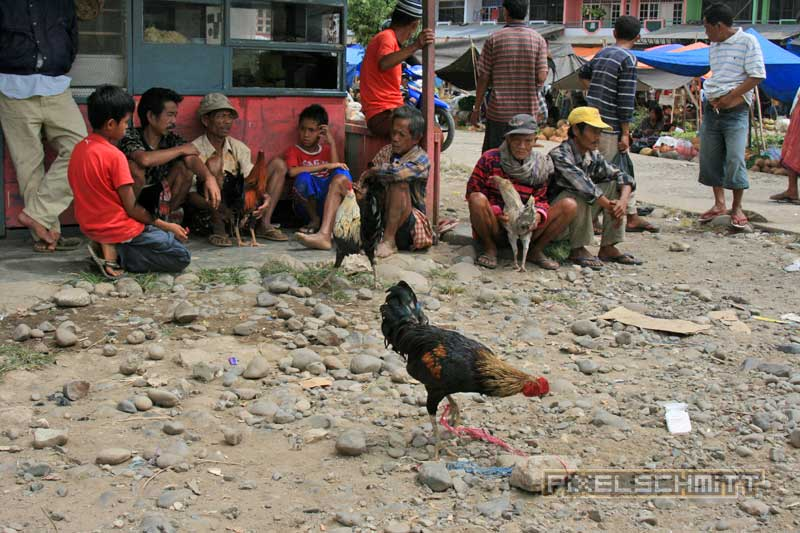 bueffel-markt-rantepao-sulawesi-fotos-026