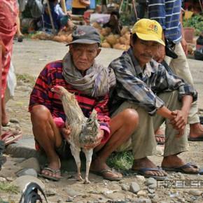 bueffel-markt-rantepao-sulawesi-fotos-027