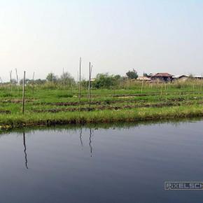 reisebericht-myanmar-inle-see-schwimmende-felder-05