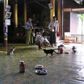 reisebericht-myanmar-inle-see-springen-katzen-07