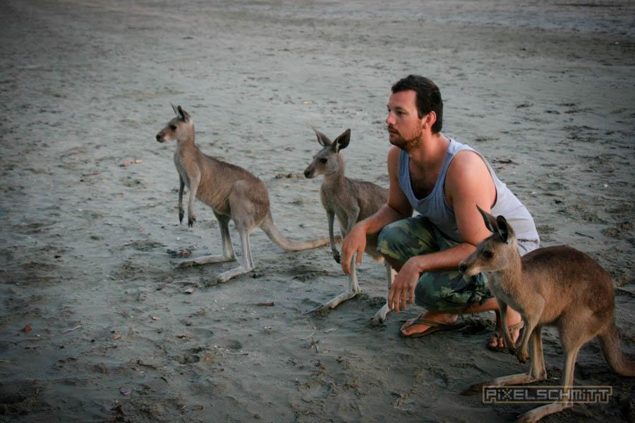 kaenguru-fotos-australien-0401