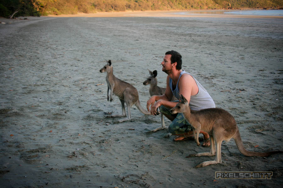 kaenguru-fotos-australien-0402