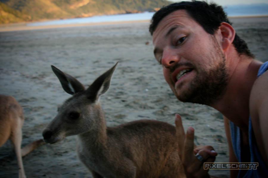 kaenguru-fotos-australien-0413