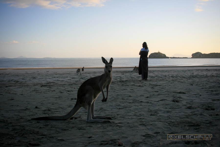 kaenguru-fotos-australien-0419