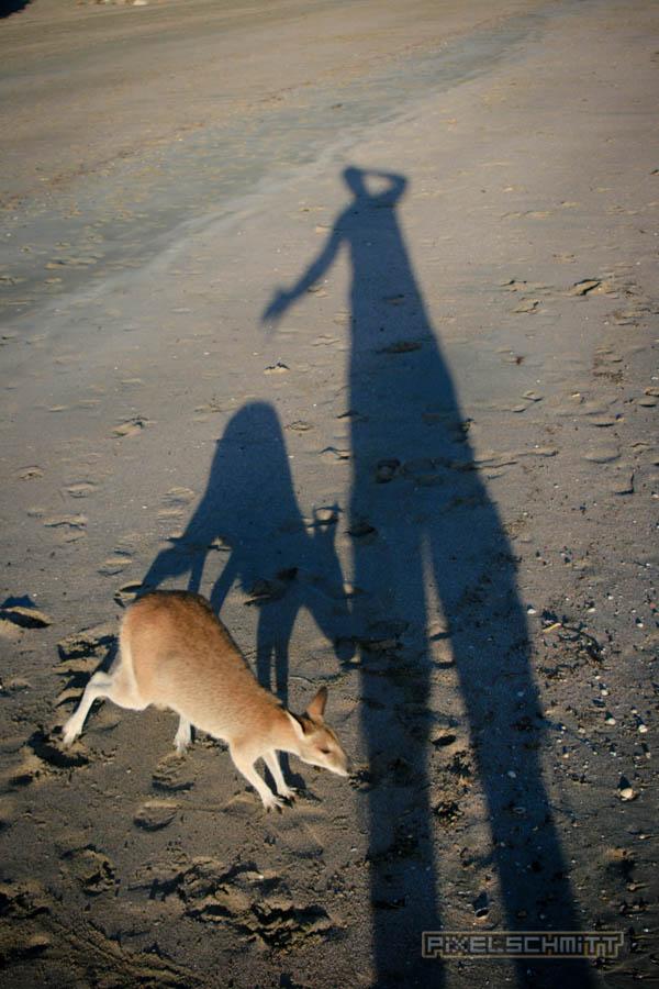 kaenguru-fotos-australien-0454