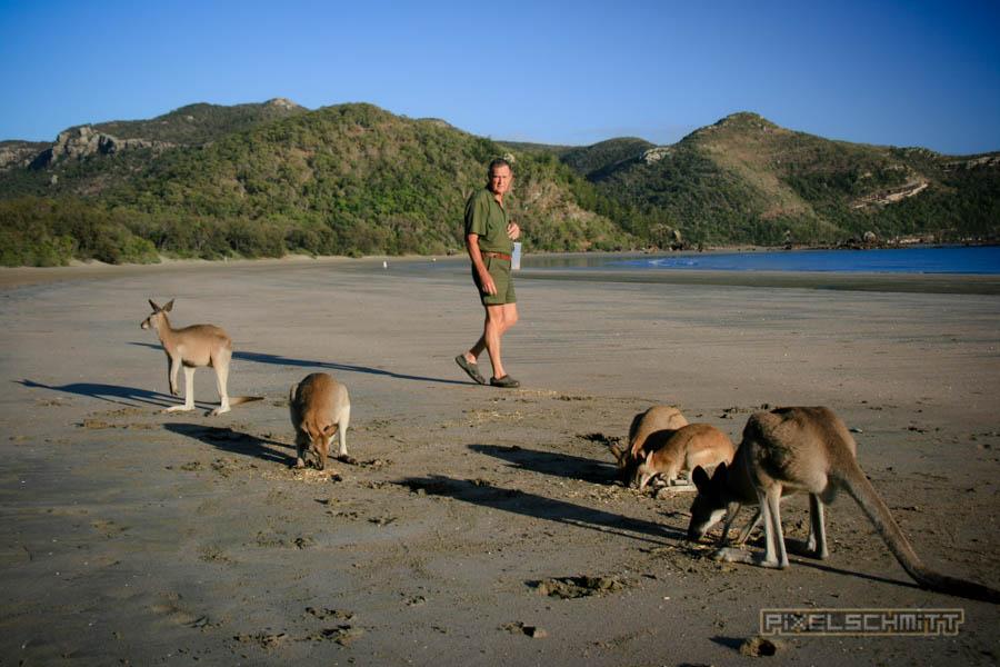 kaenguru-fotos-australien-0465
