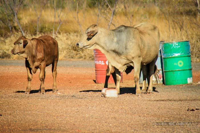 mietwagen-outback-wichtige-hinweise-8185