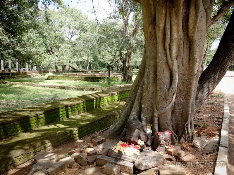 sri-lanka-fotos-polonnaruwa-14
