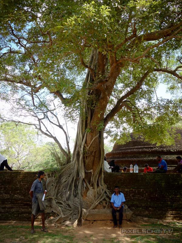 sri-lanka-fotos-polonnaruwa-7