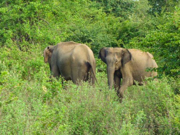 uda-walawe-national-park-safari-16