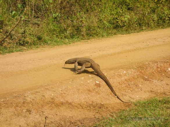 uda-walawe-national-park-safari-26