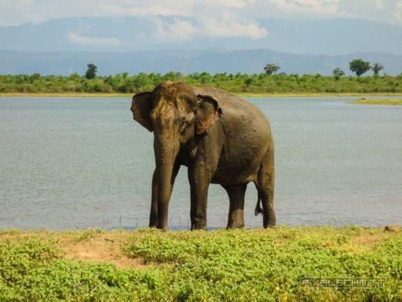 uda-walawe-national-park-safari-27