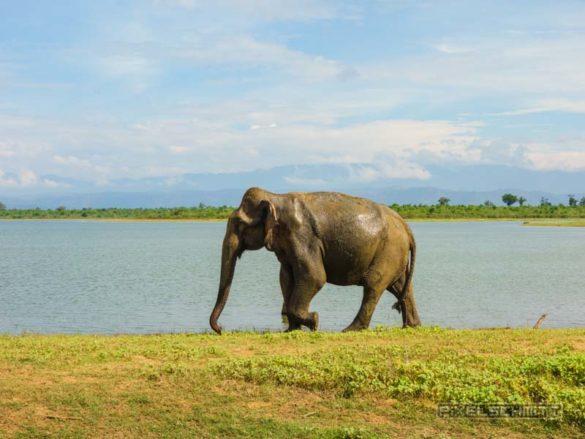 uda-walawe-national-park-safari-28