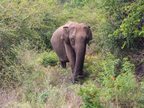 uda-walawe-national-park-safari-4