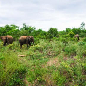 uda-walawe-national-park-safari-6