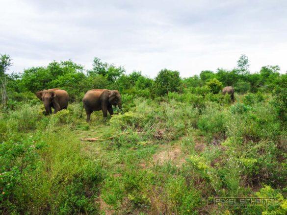 uda-walawe-national-park-safari-6