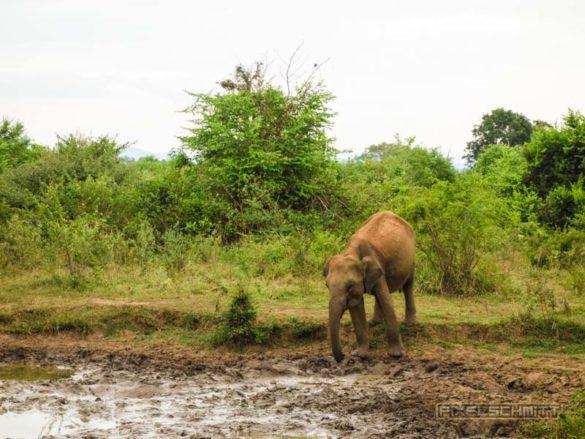 uda-walawe-national-park-safari-7