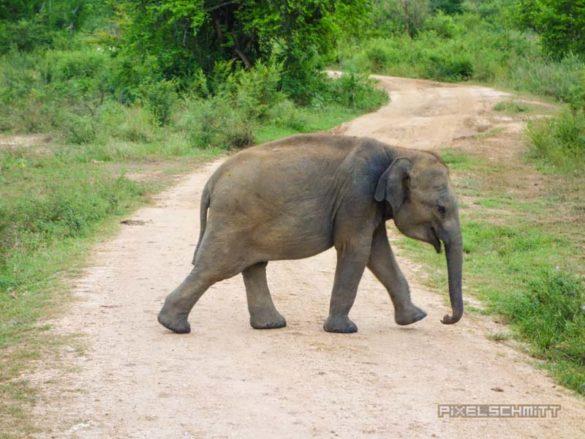uda-walawe-national-park-safari-8