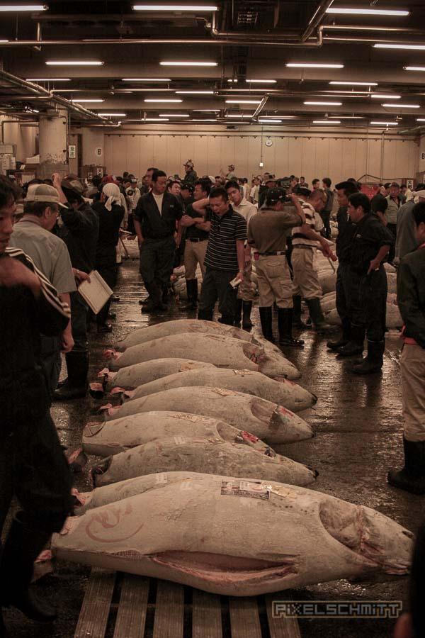 fischmarkt-tokyo-11