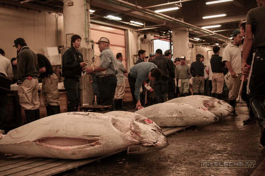 fischmarkt-tokyo-16