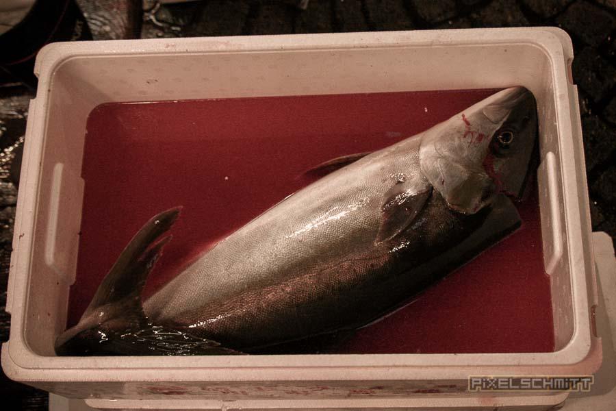 fischmarkt-tokyo-23
