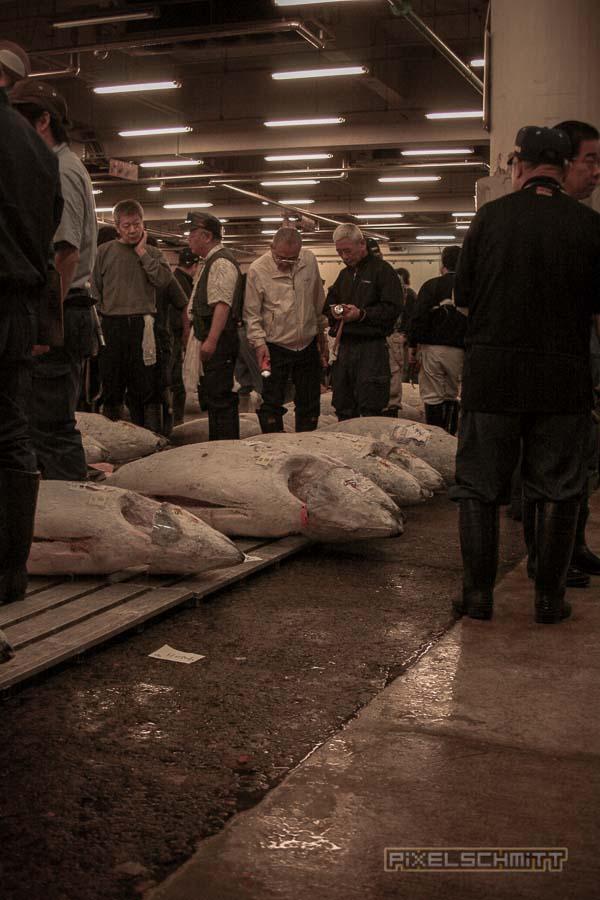 fischmarkt-tokyo-5