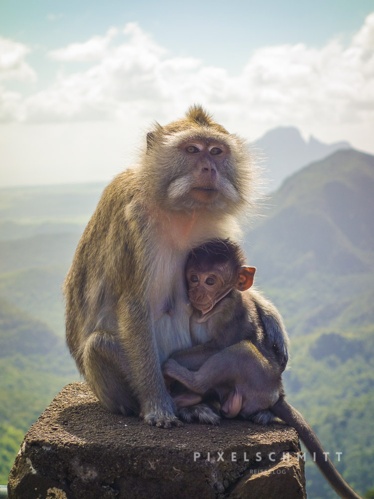 Affen auf Mauritius